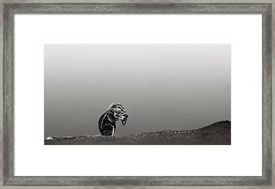 Ground Squirrel Framed Print by Johan Swanepoel