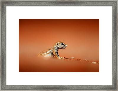 Ground Squirrel On Red Desert Sand Framed Print by Johan Swanepoel