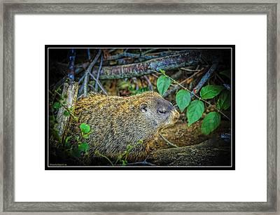 Mammals Framed Print featuring the photograph Groundhogs Day by LeeAnn McLaneGoetz McLaneGoetzStudioLLCcom