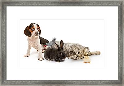 Group Of Common Household Pets Framed Print by Susan  Schmitz