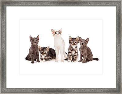 Group Of Five Young Kittens Framed Print by Susan  Schmitz