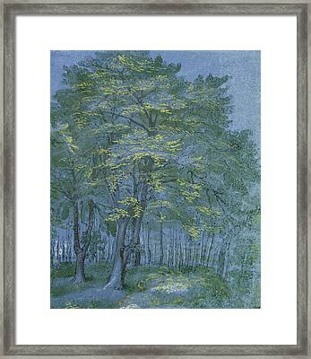 Group Of Trees In A Wood Framed Print by Hendrik Goltzius