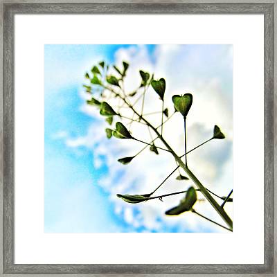 Growing Love Framed Print by Marianna Mills