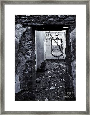 Growing Out Of Ruin Framed Print by Mike  Dawson