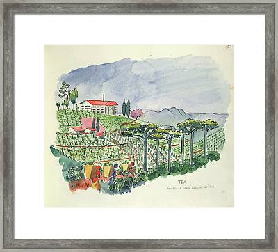 Growing Tea Framed Print by British Library