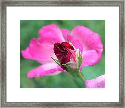 Growing Up Framed Print by Rona Black