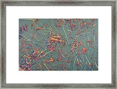 Growth Framed Print by James W Johnson