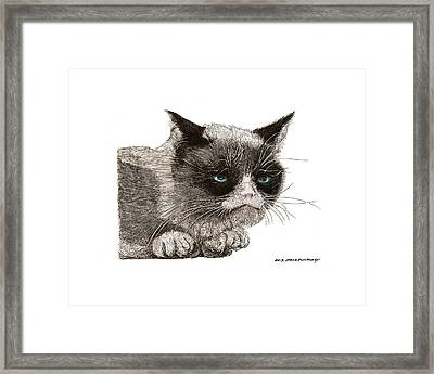 Grumpy Pussy Cat Framed Print by Jack Pumphrey