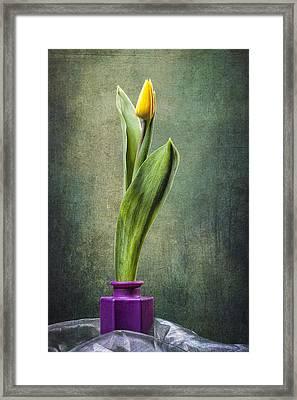 Grunge Yellow Tulip Framed Print by Erik Brede