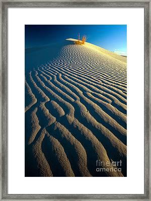 Guadalupe Dune Framed Print by Inge Johnsson