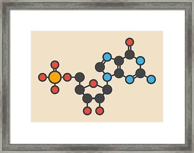 Guanylic Acid Molecule Framed Print by Molekuul