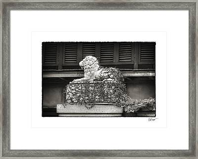 Guardian In Black And White Framed Print by Brenda Bryant