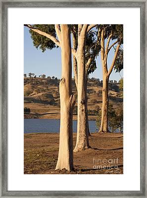 Guardians Of The Lake Framed Print by Linda Lees