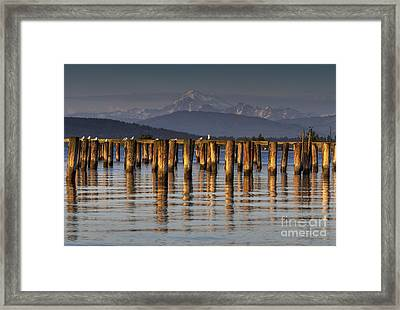 Guemes Channel Trail View Framed Print by Mark Kiver