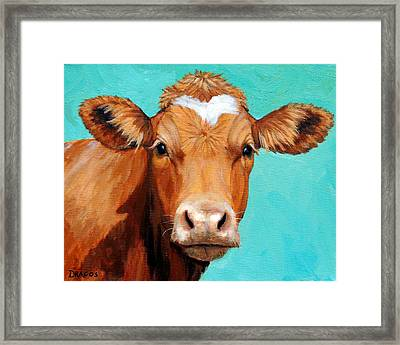 Guernsey Cow On Light Teal No Horns Framed Print by Dottie Dracos