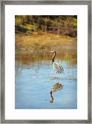 Guerrero Negro Aves 10 Framed Print by Jeff Brunton