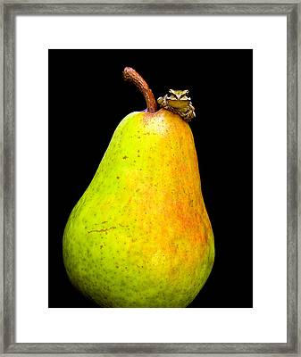 Guest A-pear-ance Framed Print by Jean Noren