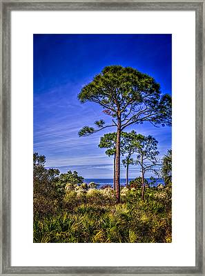 Gulf Pines Framed Print by Marvin Spates