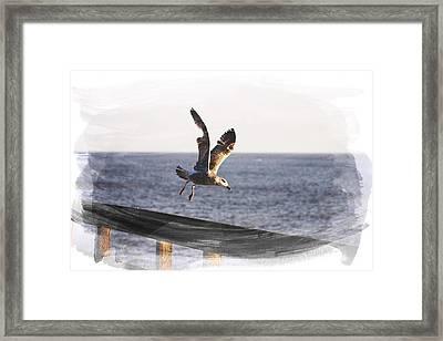 Gull In Flight Framed Print by Martin Newman
