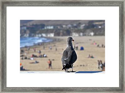Gull Watching Beach Visitors Framed Print by Susan Wiedmann