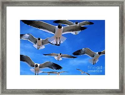 Gulls In Flight Framed Print by Geoge Ranalli