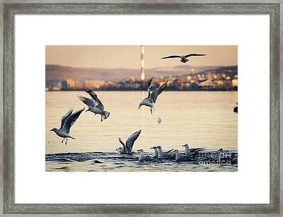 Eat Free Framed Print featuring the photograph Gulls by Jelena Jovanovic