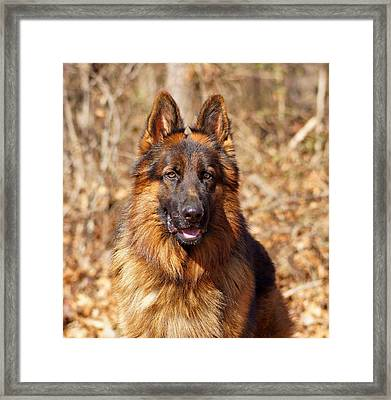Gusto Framed Print by Sandy Keeton