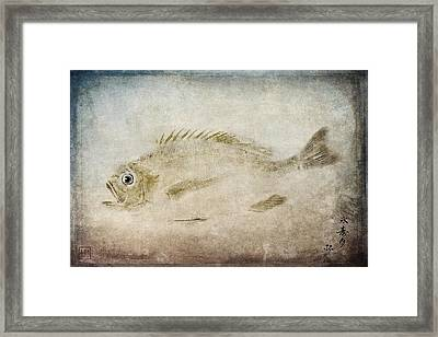 Gyotaku Fish Rubbing Japanese Framed Print by Carol Leigh
