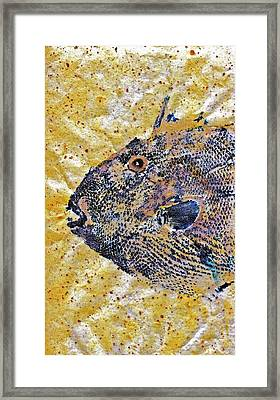Gyotaku - Triggerfish - Oldwench -  Diptych 1  Framed Print by Jeffrey Canha