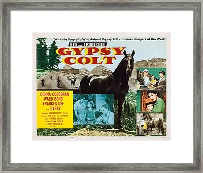 Gypsy Colt, Us Lobbycard, Center Framed Print by Everett