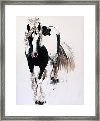 Gypsy Vanner Framed Print by Isabella Abbie Shores