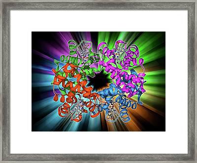 Haemoglobin Molecule Framed Print by Laguna Design