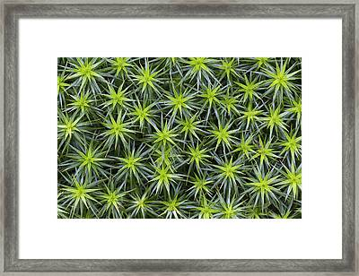 Hair Cap Moss Schleswig-holstein Germany Framed Print by Helge Schulz