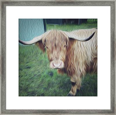 Hairy Cow Framed Print by Les Cunliffe