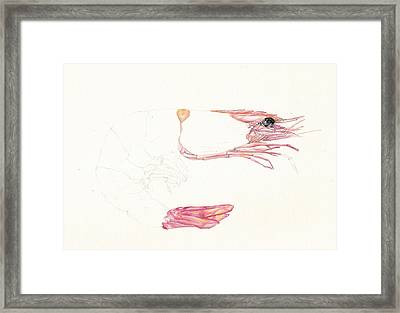 Half A Prawn Framed Print by Richard Mountford