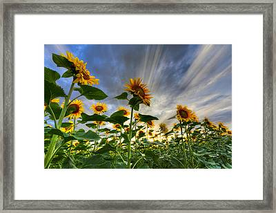 Halleluia Framed Print by Debra and Dave Vanderlaan