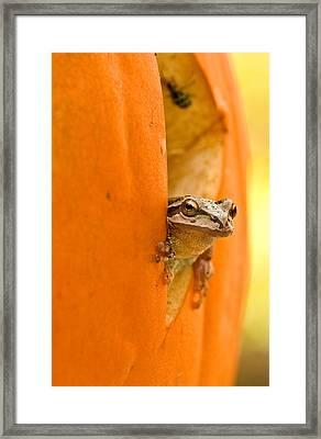Halloween Surprise  Framed Print by Jean Noren