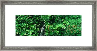 Hamakua Coast, Hawaii, Hawaii, Usa Framed Print by Panoramic Images