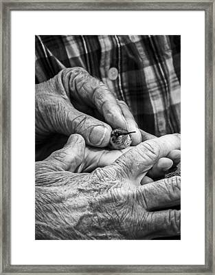 Hands Holding A Hummingbird Framed Print by Jon Woodhams