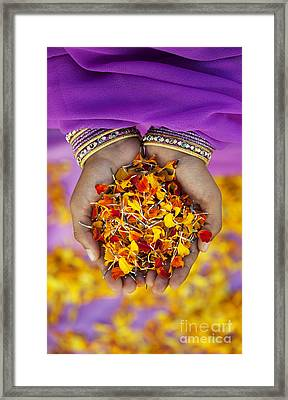 Hands Holding Flower Petals Framed Print by Tim Gainey