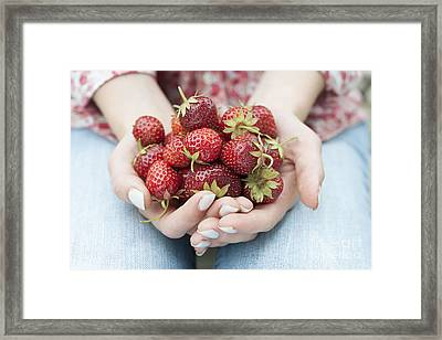 Hands Holding Fresh Strawberries Framed Print by Elena Elisseeva