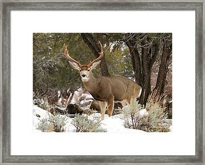 Handsome Buck Framed Print by Donna Kennedy
