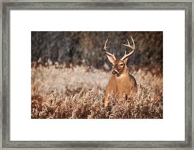 Handsome Buck Framed Print by Lori Deiter