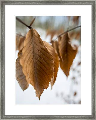 Hang In There Framed Print by Andrew Pacheco