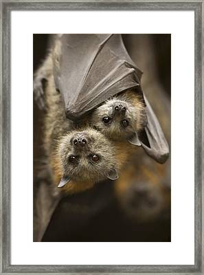 Hang In There Framed Print by Mike  Dawson