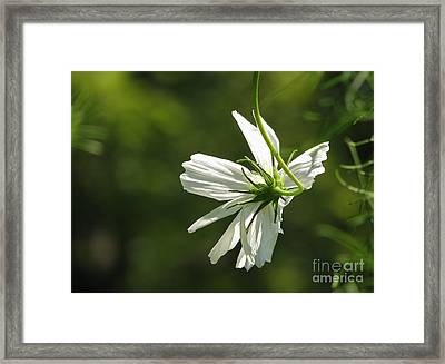 Hang On Framed Print by Ellen Cotton