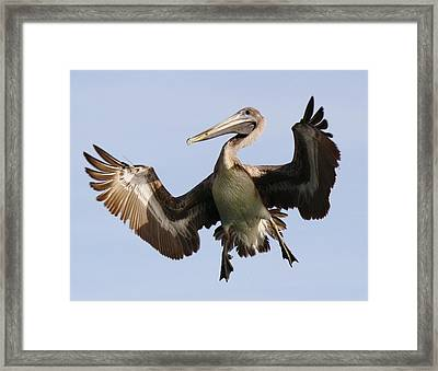 Hang Time Framed Print by Paulette Thomas
