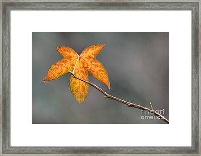 Hanger On Framed Print by Dan Holm