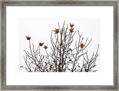 Hangers On Framed Print by Dan Holm