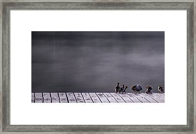 Hangin Out Framed Print by Aaron S Bedell